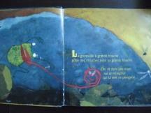 grenouille grande bouche (1)